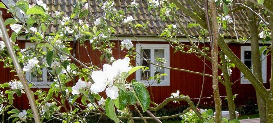 Butiken i Röda Huset ligger på lekplatsen i närheten av Bosjöklosters Café & Restaurang