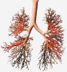 Excempel: vid besvär med andning kan lungor skannas och analyseras.