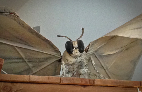 Uppförstorad sidenfjäril. Vilka skyddslappar!