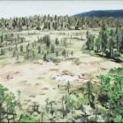 Skog Kindlahöjden