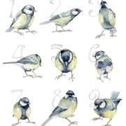 42. Sifferfåglar