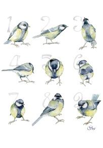 13. Sifferfåglar