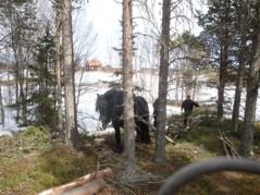 Vedkörning HansOle och Sognar