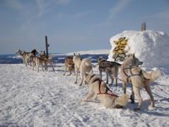Toppbestigning, Norska sidan av Härjehogna