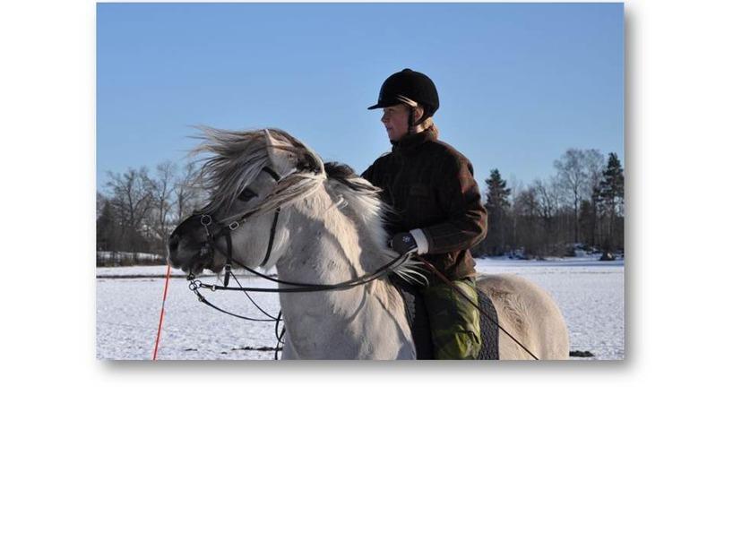 Carina och fjordhästen Marco
