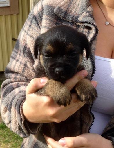 2015-05-12 Casey 4 veckor gammal