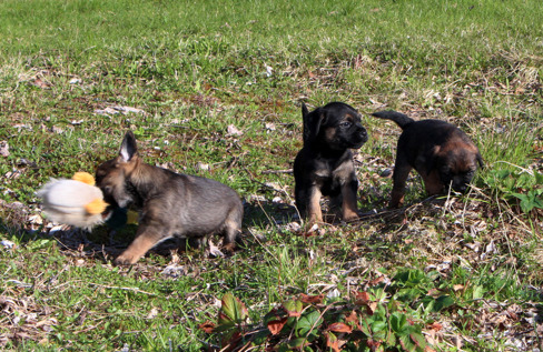 2015-05-23 Charile, Casey  och Chely
