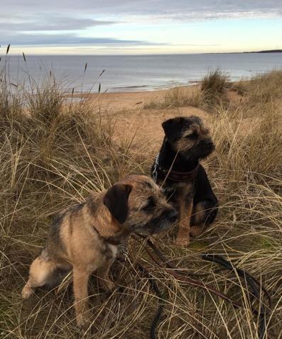 2016-03-05 Arwen och Zack vid Havet i Halmstad.