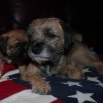 Elsie & Arwen 161206