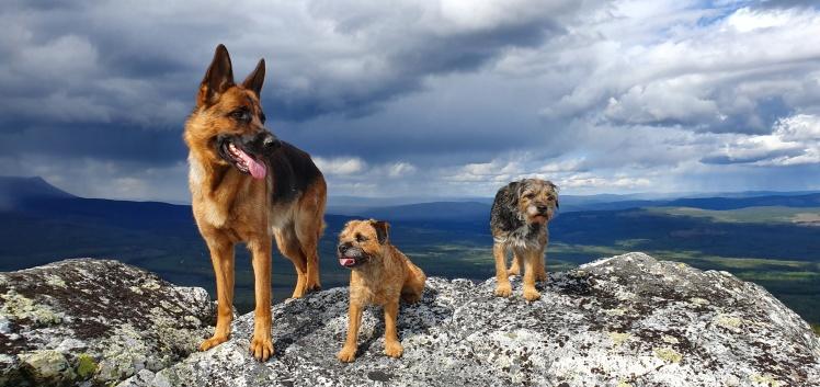 Emma, Elsie och Quilla på fjälltur.