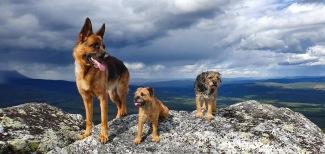 Emma, Elsie och Quilla