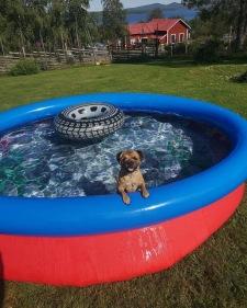 Elsie tar sig ett dopp sommaren 2019