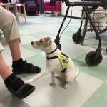 Wilma gjorde sina moment och blev godkänd för att arbeta vidare som tjänstehund i Hunden i Vården