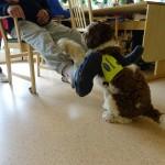 Teddy tränar grovmotorik tillsammans med brukaren