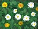 Målning/Painting: Ljuvlig sommar/Lovely Summer