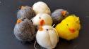 Ull/Wool - Domherre & Kyckling/Bullfinch & Chicken