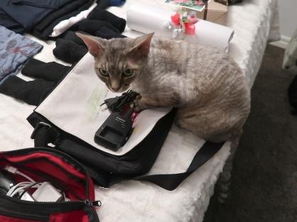 Ferdinand hjälpte till att packa, egentligen ville han nog bli packad själv!