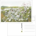 Kort/Card - Vykort/Postcards - Vykort/Postcards - Blommande rosenskäror/Flowering Rose Shades