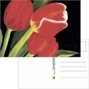 Kort/Card - Vykort/Postcards - Vykort - Vårlöftet
