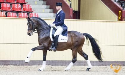 Bild lånad från Dream Sport Horses