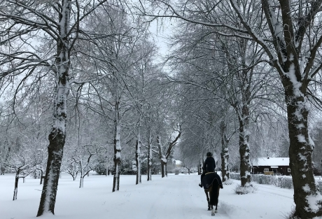 Vackra ridvägar. Här herrgårdsområdet i vinterskrud.