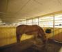 Träullit Agro för stalltaket