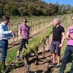 Besök vingård