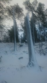 Snöpuls pass i skogen? Bra för både fotstyrka, puls och benstyrka.