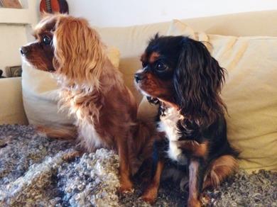 Maja 5.5 år och Nelly 10 månader. De är fina kompisar och Nelly är stor tjej nu.