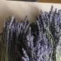 Två härligt doftande lavendelbuketter direkt från Provence!