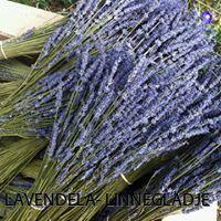 Vackra doftande blå lavendelbuketter