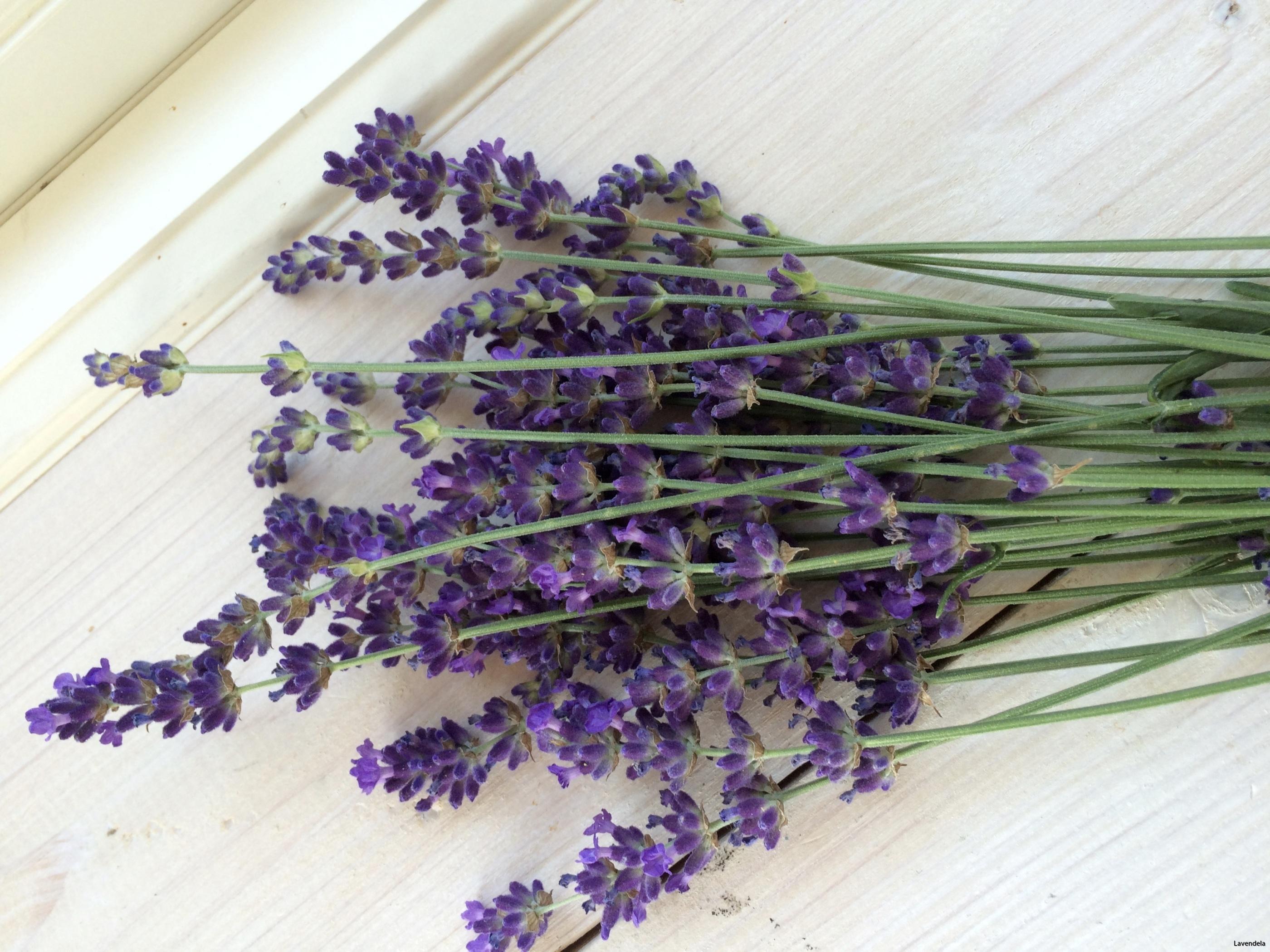 Egen odlad lavendel.