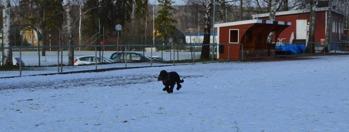 Zäta, 9 år, gjorde en attack på sitt rekord från 2012, men underlaget var inte till hans fördel idag