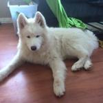 Björn 6 månader