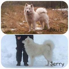 Akuti och Jerry