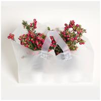 Maxipac produktfoto blompåse