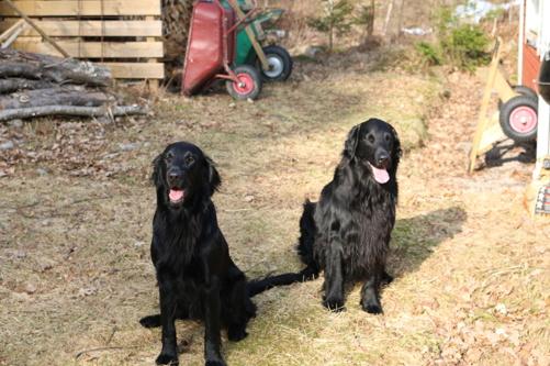 Vera och Isak