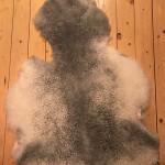 Nr: 18111. Korsningsskinn Finull-Gotland, grått och vitt. Ekoberedning 35 mm. 94x75cm. Annorlunda och roligt, både mjukt och lockigt men med skada/jack vid halsen. Pris: 900kr