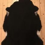 Nr: 18010. Finullsskinn, svart. Ekoberedning 35mm. 102x76cm. Mjukt. Pris: 1100kr