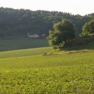 Fält i Bjerrome-Åhs_2