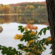 Höst Åkulla bokskogar oktober 2013_6