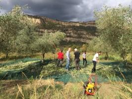 I mars öppnade Alexis Birbas sin butik i Garfaregränd med grekiska produkter. Här ser ni hans olivlund i Goumero.