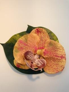Orange orkidé