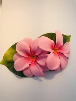 Rosa hawaii