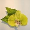 Lime orkidé