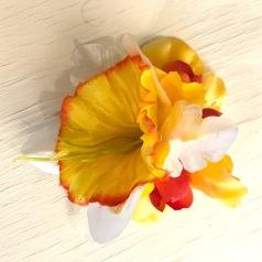 Stor påsklilja gul/ röd
