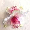 Stor dubbelorkide rosa