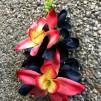 Hårblomma svart Korallröd