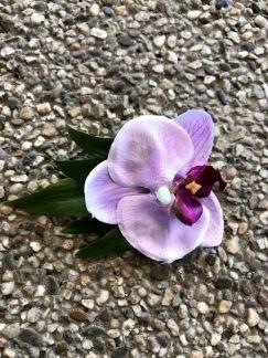 Hårblomma liten lila orkide