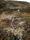 Markeringen av leden skedde på lite olika sätt, ibland med målade stenar, ibland med stenrösen, ibland med målade markeringar på träd och ibland med dessa träbitar i de samiska färgerna.